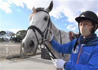 【いきもの語り】ミライヘノツバサ、第2の「馬生」へ 誘導馬見習い