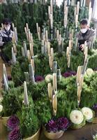 【動画】「新年は華やかに」 大阪で門松作りが最盛期
