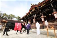 【動画】「丑年」ちなみ 牛が北野天満宮を参拝