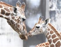 【栃木・年の瀬記者ノート】命名権、自虐PR…知恵絞る宇都宮動物園の目線