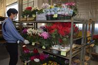 """【コロナ禍を生きる】(2)「花のある生活」定着へ 栃木県内の花卉業界、個人向けに""""光"""""""