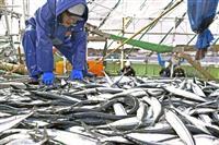 サンマ水揚げ2年連続で最低 昨年、27%減の2万9566トン