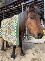 【長野・須坂市動物園 飼育員日誌】ポニーの「ゆき」 老体に毛布の防寒具