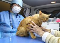 【いきもの語り】走れ!動物専用救急車 外出せず往診、コロナ禍で新たな需要