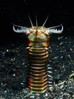 海底に潜むその奇怪な巨大生物は、2,000万年も前から魚を襲っていた:研究結果