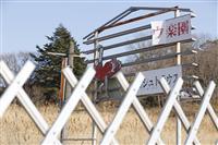 無人の町さまようダチョウ 餌求め農場から脱走、福島