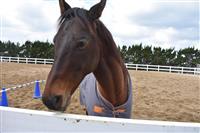 ディープインパクトの子も活躍 人も馬も癒やされる牧場