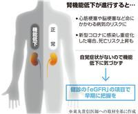 【100歳時代プロジェクト】健康の鍵握る「腎臓」 機能悪化はコロナで死亡リスクにも