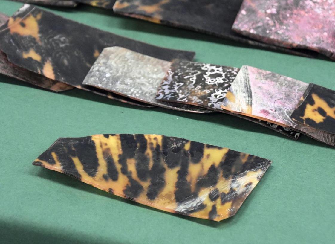 ウミガメ甲羅を密輸疑い ハイチから郵便、2人逮捕