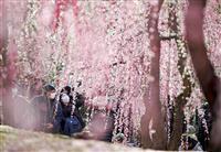 【動画】古都に春の訪れ 城南宮で梅満開
