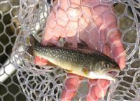 【和食伝導 金沢から世界へ】「自然と共生」イワナ釣りが原体験