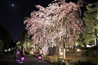 京都・二条城で夜桜テーマにアート展