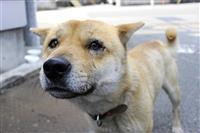 【一聞百見】東日本大震災で残された犬猫たちを救う 元戦場カメラマンの信念