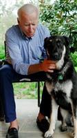バイデン大統領の愛犬、また職員をかむ