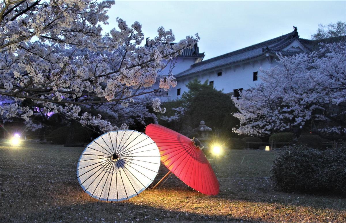 姫路城夜桜・よこ