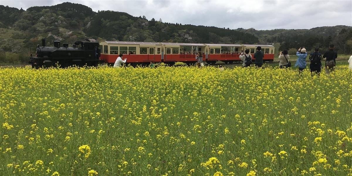 菜の花畑走る列車