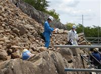 彦根城保護の職員、熊本城に転身 派遣きっかけ「復旧見届ける」