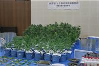 【深層リポート】神奈川発 薬物の誘惑 コロナ禍に忍び寄る 大麻摘発者 昨年10%超す増…