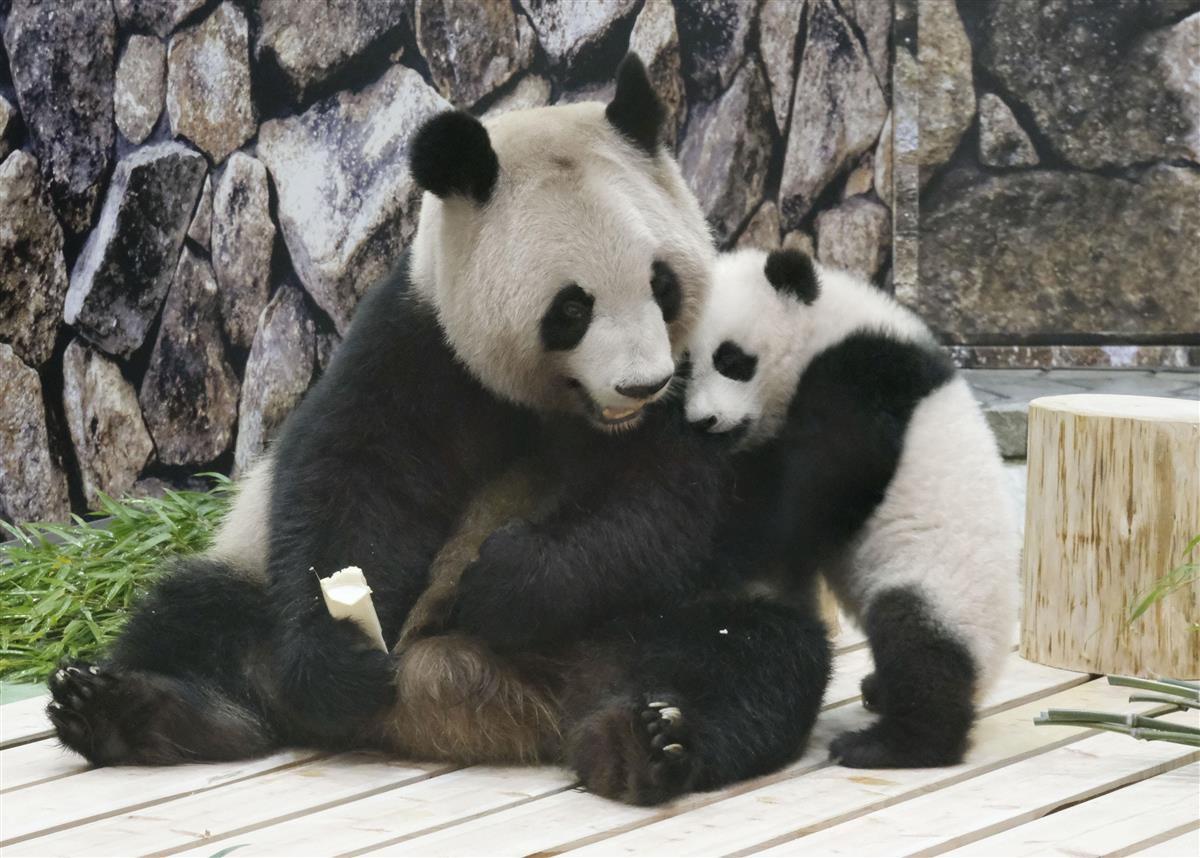 パンダ母子でいっしょに 和歌山アドベンチャーワールド