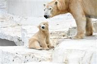 【園長は獣医さん】天王寺動物園が生まれ変わる 新しい獣舎計画が続々