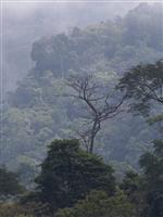 南米の熱帯雨林は、恐竜を絶滅させた「小惑星の衝突」のおかげで誕生した:研究結果