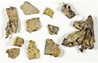 死海写本の新たな断片発見 60年ぶり、イスラエル