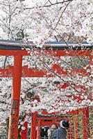 【Yukiaの洛中洛外】京都の桜 行く春
