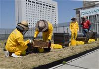 【動画】大丸の屋上でミツバチ飼育 実は品質が良い都市養蜂