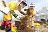 「心斎橋はちみつプロジェクト」の採蜜作業始まる