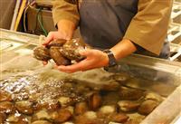 【ウエカツ流サカナ道一直線】(53)北海がもたらす豊満な海の肉