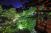 【動画】東福寺で青もみじライトアップ、未来を照らす希望に