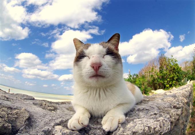 笑った猫の画像