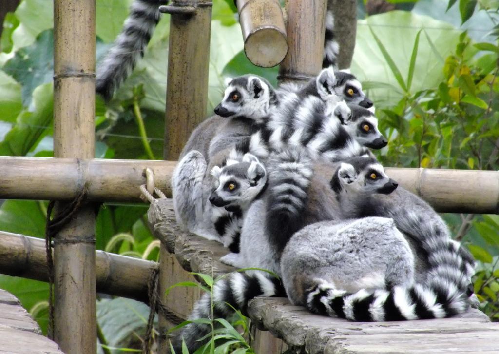 産経フォト動く被写体に悪戦苦闘 上野動物園で産経フォトウオーク
