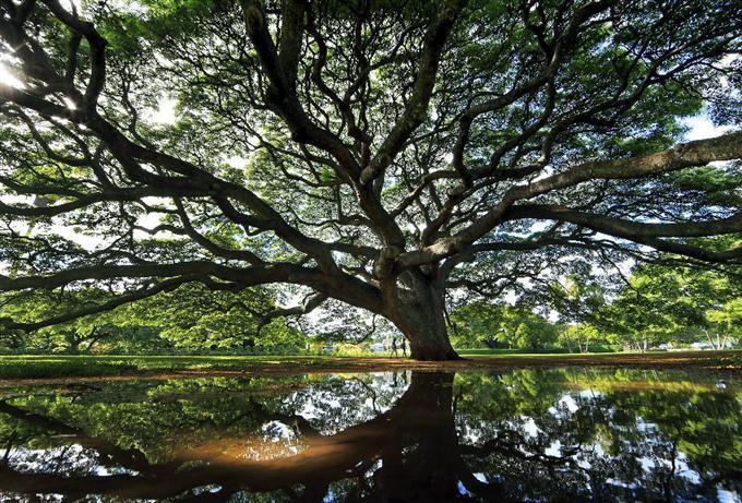 産経フォト「この木なんの木」… ハワイ・オアフ島サイトナビゲーション「この木なんの木」… ハワイ・オアフ島PRPRスゴい!もっと見る瞬間ランキングもっと見るPRPRPRPR産経スペシャル今週のトピックス話題のランキング