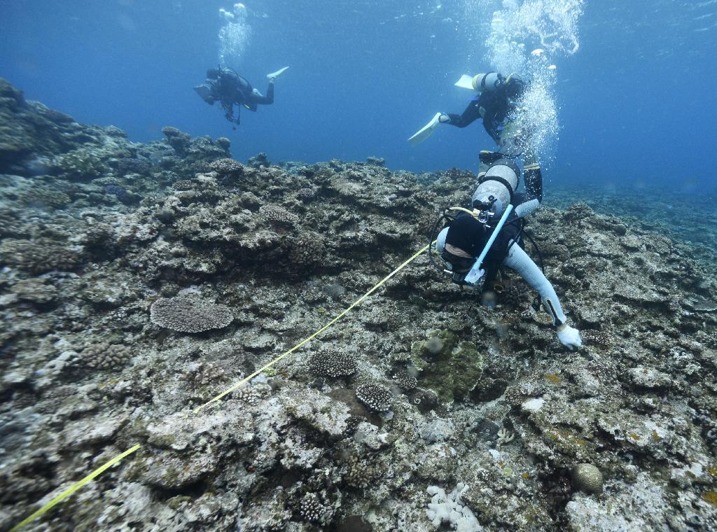 沖縄県名護市辺野古の沖合水深5メートルで行われたサンゴなどの生息状況を... 沖縄県名護市辺野古