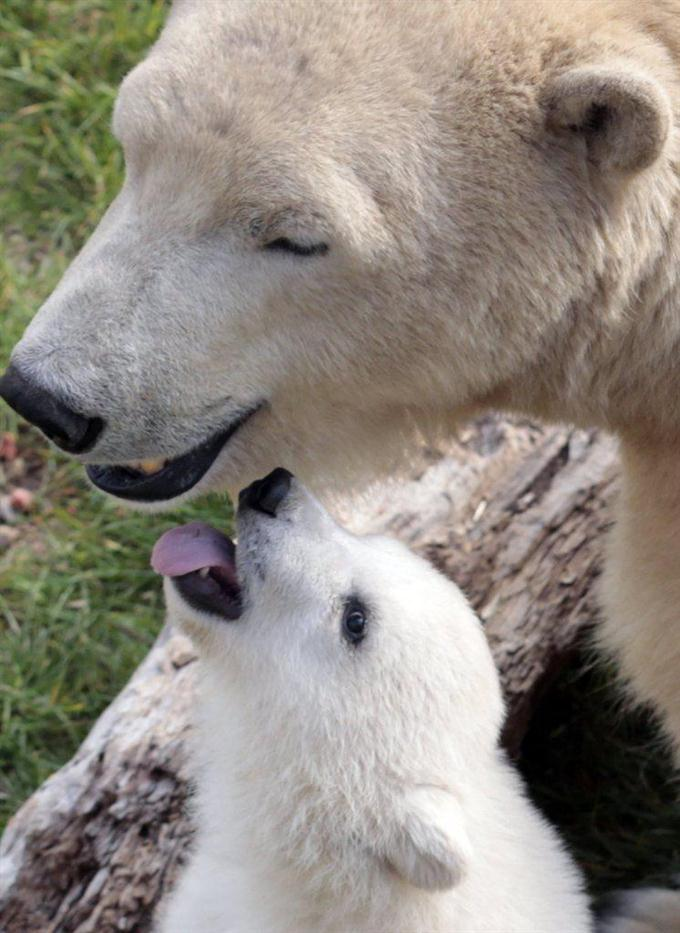 産経フォト小熊の名前、ホープに決まるサイトナビゲーション小熊の名前、ホープに決まるPRPRスゴい!もっと見る瞬間ランキングもっと見るPRPRPRPR産経スペシャル今週のトピックス話題のランキング