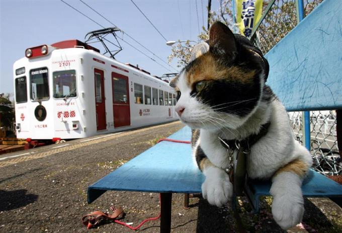 ホームで電車を見送るたま駅長=2008年04月(頼光和弘撮影)