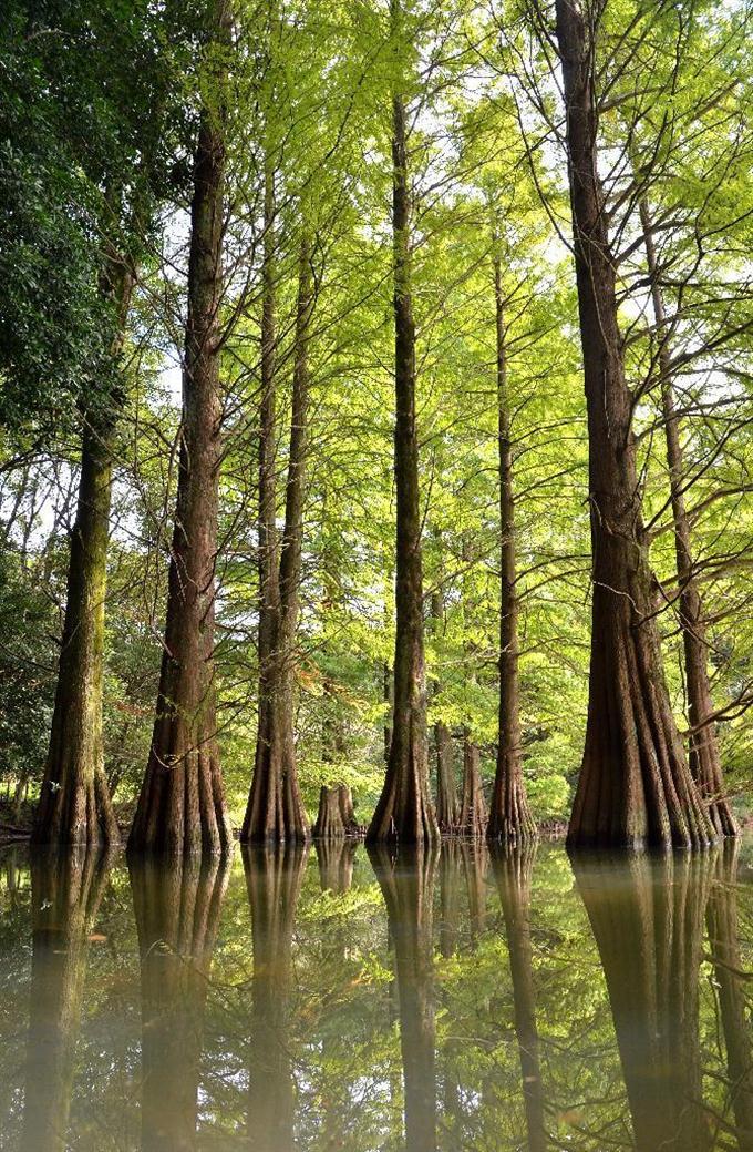 view 池に浮かぶ円錐の巨木 福岡...