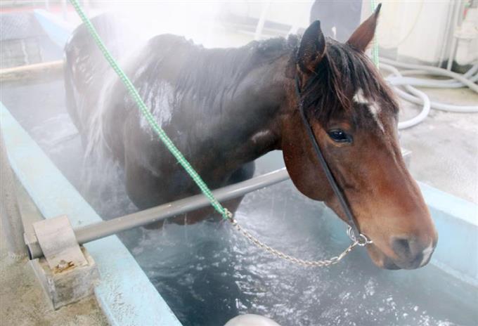 「競走馬 温泉」の画像検索結果