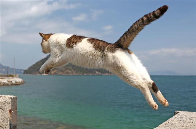 と立てて、防波堤の切れ目を華麗にジャンプする