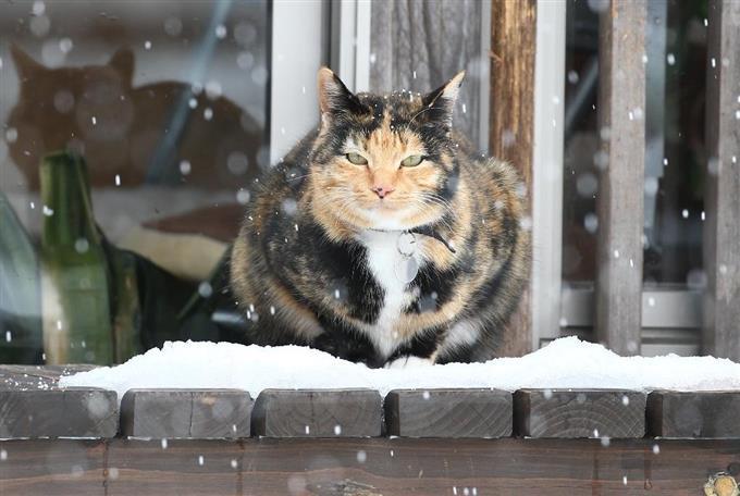 猫、春を待つ 雪に包まれた「猫...