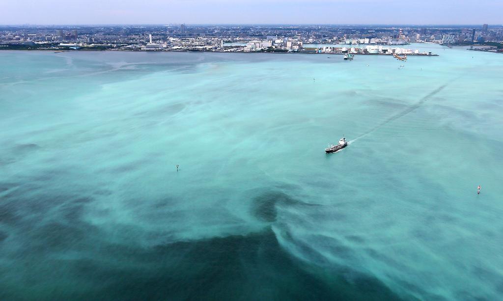 東京湾沿岸で青潮 千葉、帯状に...