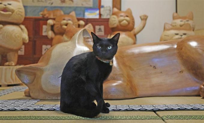 猫とPCケース 69台目©2ch.netYouTube動画>50本 ->画像>982枚
