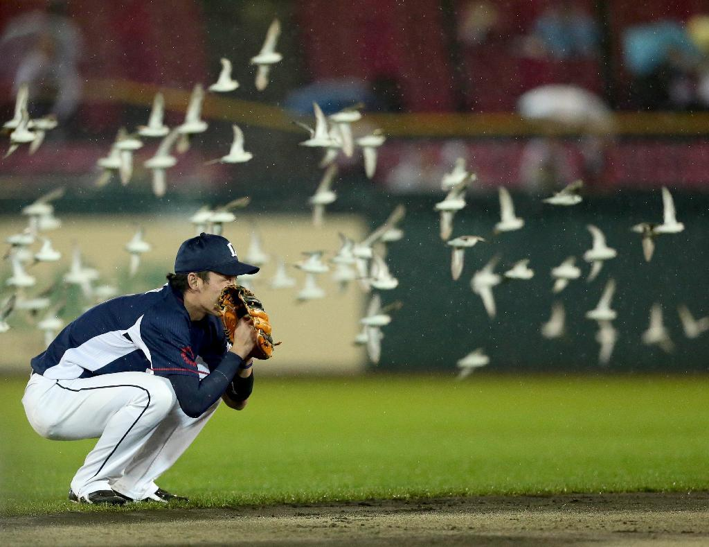 産経フォト鳥の大群で試合中断 笛、花火、照明消し…ドローンも投入