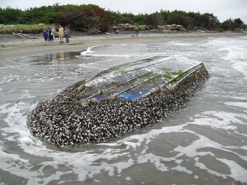 津波で生物290種北米に 貝や甲殻類、漂流物に付着 読んで見フォト 産経フォト