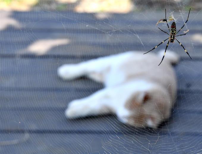 最優秀賞「やったね、猫キャッチ!」高野英治さん