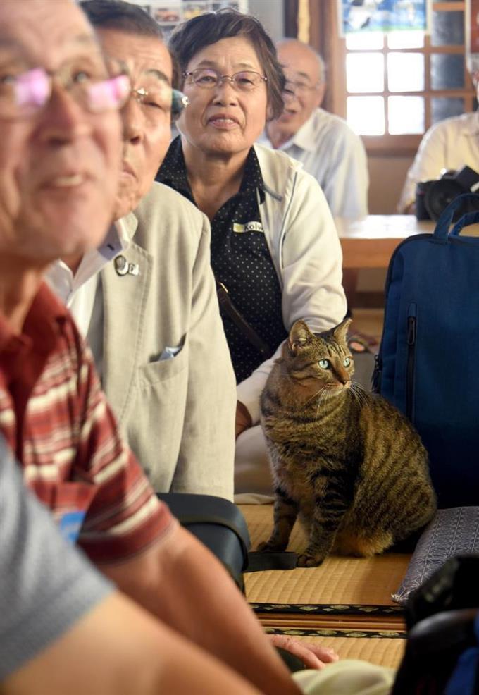 講評会に〝飛び入り参加〟したのは、この日、参加者の皆さんの被写体にもなった猫の「ミーコ」=11日午後、神奈川県三浦市城ヶ島の磯料理「かねあ」(酒巻俊介撮影)