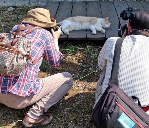 秋晴れの日差しを避けて昼寝する猫を撮影する参加者=11日、神奈川県三浦市の城ケ島(尾崎修二撮影)