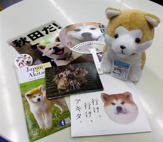秋田犬の話題・最新情報 BIGLOBEニュース