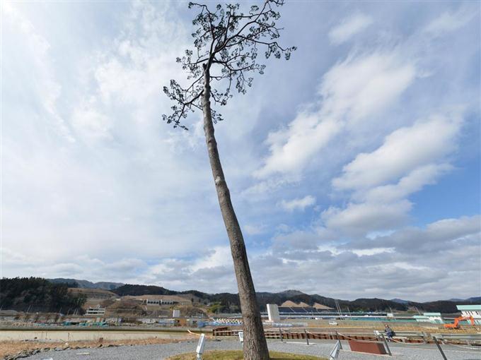 復興のシンボル「一本松」①【東...